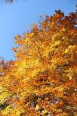 Spadek liści i błękitne niebo — Zdjęcie stockowe