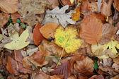 Fall foliage — Stock Photo