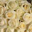 Group of frosted white roses — Stock Photo