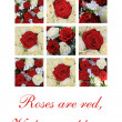 Red and white roses Valentine — Stock Photo #18144355