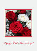 Red and white roses Valentine — Stock Photo
