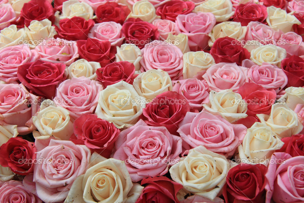 White and two shades of pink roses in a flower arrangement  Stock Photo #18388315