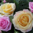 Yellow and pink roses — Stock Photo #18652621