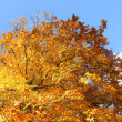Fall Foliage and a clear blue sky — Stock Photo #18652849