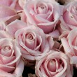 Wedding bouquet close up: pink roses — Stock Photo