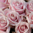 Wedding bouquet close up: pink roses - Stockfoto