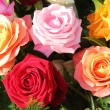 Multicolored roses in flower arrangement — Stock Photo #19032439