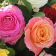 Multicolored roses in flower arrangement - Stockfoto