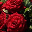 Wet red roses — Stock Photo #19033657