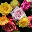 Multicolored rose bouquet - Stockfoto
