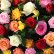 Multicolored roses in flower arrangement — Stock Photo #19306039