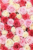 Rosas blancas y rosadas en el arreglo — Foto de Stock