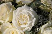 White bridal roses — Stock Photo