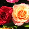 Multicolored roses in flower arrangement — Stok fotoğraf