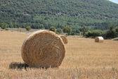 Fresh bales of hay — Stock Photo
