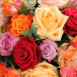 Colorful rose bouquet — Stock Photo #19908115
