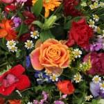 Flower arrangement in bright colors — Stock Photo #20067965