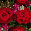 Red and pink bridal flowers — Stockfoto