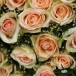 Pale pink wedding roses — Stock Photo