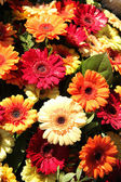 Gerberas in red, orange and yellow — Stock Photo