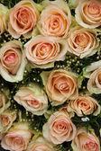 Pale pink wedding roses — Stock Photo