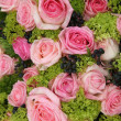 Pink roses in a group — Stock Photo