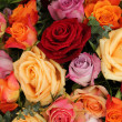 Colorful rose bouquet — Stock Photo #23548429