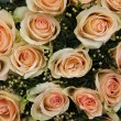 Pale pink wedding roses — Stock Photo #23548779