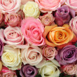 Stock Photo: Mixed pastel roses