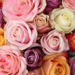 Stock Photo: Wedding roses in pastel colors