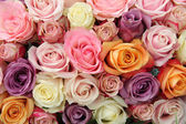 Mixed pastel roses — Stock Photo