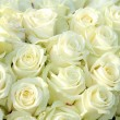 Group of white roses, wedding decorations — Stock Photo #23599055