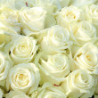 Stock Photo: Group of white roses, wedding decorations