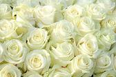 Grupa białych róż, ślubne dekoracje — Zdjęcie stockowe