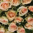 Pale pink wedding roses — Stock Photo #24791601
