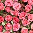 Group of Pink roses — Stock fotografie