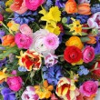 Stock Photo: Colorful spring flowers