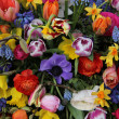Colorful spring flowers — Stock Photo