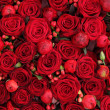 Ranunculus, berries and roses in a group — Photo