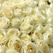 Group of white roses in floral wedding decorations — Stock Photo #25594867