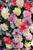 Pastel carnations — Stock Photo