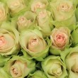 Pale pink roses in a wedding arrangement — Stock Photo