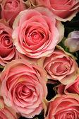 Gelin düzenlenmesi, pembe çiçekler — Stok fotoğraf
