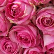 Big pink roses in a wedding centerpiece — Stock Photo #26190069