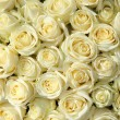 Group of white roses in floral wedding decorations — Stock Photo #27126225