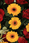 Yellow and red flowers in a bridal arrangement — Стоковое фото