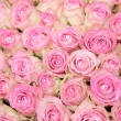 Pink roses in a group — Stock Photo #27738039