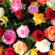 Multicolored roses in flower arrangement — Stock Photo #27867055