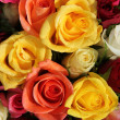 Multicolored roses — Stock Photo