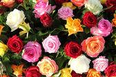 Multicolored roses in flower arrangement — Stock Photo
